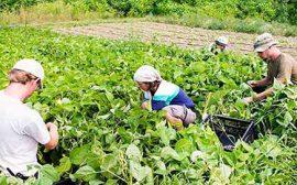 Tarım Hayvancılıkta Çalışacak Karı Koca Çiftlik Elemanı / İstanbul Anadolu Yakası